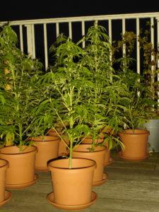 Virginia marijuana charges